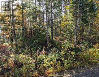Photo 4: Lots Samuel Mader Road in New Canada: Vacant Land for sale : MLS®# 202100319
