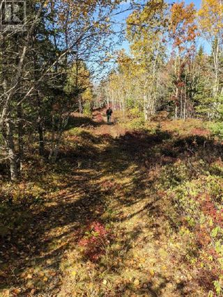 Photo 6: Lots Samuel Mader Road in New Canada: Vacant Land for sale : MLS®# 202100319