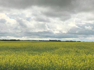 Photo 11: 51072 Range Road 243: Rural Leduc County Rural Land/Vacant Lot for sale : MLS®# E4077700