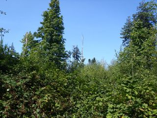 Photo 7: LT 1 W Island Hwy in QUALICUM BEACH: PQ Qualicum North Land for sale (Parksville/Qualicum)  : MLS®# 708171