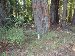 Photo 15: LT 1 W Island Hwy in QUALICUM BEACH: PQ Qualicum North Land for sale (Parksville/Qualicum)  : MLS®# 708171