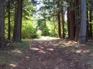 Photo 6: LT 1 W Island Hwy in QUALICUM BEACH: PQ Qualicum North Land for sale (Parksville/Qualicum)  : MLS®# 708171