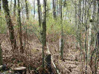 Main Photo: 10 52228 RGE RD 30 Road: Rural Parkland County Rural Land/Vacant Lot for sale : MLS®# E4101096