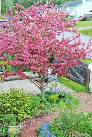Photo 5: 6797 Rhodonite Dr in Sooke: Sk Broomhill Single Family Detached for sale : MLS®# 840403