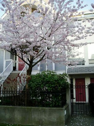 """Photo 1: 3062 WILLOW Street in Vancouver: Fairview VW Townhouse for sale in """"WILLOW PLACE"""" (Vancouver West)  : MLS®# R2077060"""