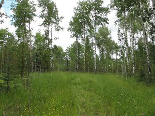 Photo 5: 111 acres Bragg Creek/Priddis Street W: Rural Foothills County Land for sale : MLS®# C4289790
