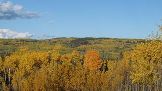 Photo 21: 111 acres Bragg Creek/Priddis Street W: Rural Foothills County Land for sale : MLS®# C4289790