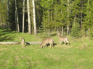 Photo 4: 111 acres Bragg Creek/Priddis Street W: Rural Foothills County Land for sale : MLS®# C4289790
