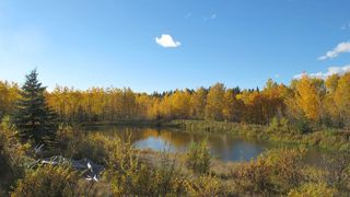 Photo 10: 111 acres Bragg Creek/Priddis Street W: Rural Foothills County Land for sale : MLS®# C4289790