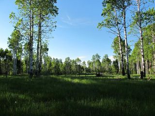 Photo 15: 111 acres Bragg Creek/Priddis Street W: Rural Foothills County Land for sale : MLS®# C4289790