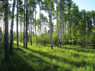Photo 8: 111 acres Bragg Creek/Priddis Street W: Rural Foothills County Land for sale : MLS®# C4289790