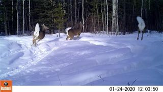 Photo 22: 111 acres Bragg Creek/Priddis Street W: Rural Foothills County Land for sale : MLS®# C4289790