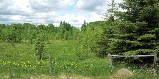 Photo 9: RR41 & Twp 460: Rural Wetaskiwin County Rural Land/Vacant Lot for sale : MLS®# E4134997