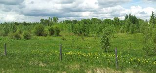 Photo 8: RR41 & Twp 460: Rural Wetaskiwin County Rural Land/Vacant Lot for sale : MLS®# E4134997