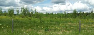 Photo 13: RR41 & Twp 460: Rural Wetaskiwin County Rural Land/Vacant Lot for sale : MLS®# E4134997