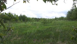 Photo 16: RR41 & Twp 460: Rural Wetaskiwin County Rural Land/Vacant Lot for sale : MLS®# E4134997