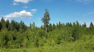 Photo 5: RR41 & Twp 460: Rural Wetaskiwin County Rural Land/Vacant Lot for sale : MLS®# E4134997