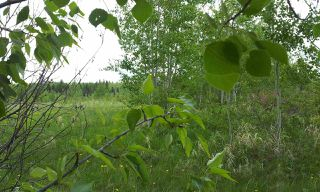 Photo 15: RR41 & Twp 460: Rural Wetaskiwin County Rural Land/Vacant Lot for sale : MLS®# E4134997