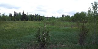 Photo 17: RR41 & Twp 460: Rural Wetaskiwin County Rural Land/Vacant Lot for sale : MLS®# E4134997