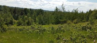 Photo 3: RR41 & Twp 460: Rural Wetaskiwin County Rural Land/Vacant Lot for sale : MLS®# E4134997