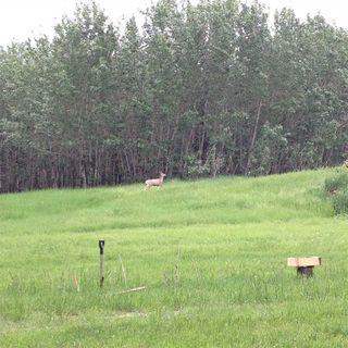 Photo 16: 594 Rge Rd 245: Rural Westlock County Rural Land/Vacant Lot for sale : MLS®# E4152106