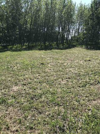 Photo 13: 594 Rge Rd 245: Rural Westlock County Rural Land/Vacant Lot for sale : MLS®# E4152106