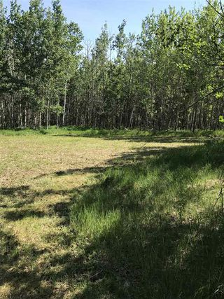 Photo 10: 594 Rge Rd 245: Rural Westlock County Rural Land/Vacant Lot for sale : MLS®# E4152106