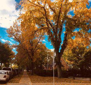 Photo 5: 703 9916 113 Street in Edmonton: Zone 12 Condo for sale : MLS®# E4098109