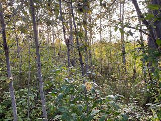 Photo 5: 18,19 Summerhaven: Rural Wetaskiwin County Rural Land/Vacant Lot for sale : MLS®# E4214918