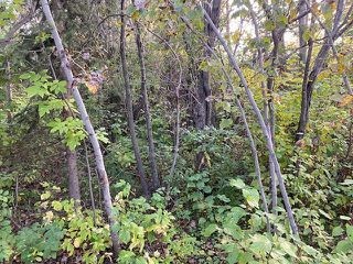 Photo 6: 18,19 Summerhaven: Rural Wetaskiwin County Rural Land/Vacant Lot for sale : MLS®# E4214918