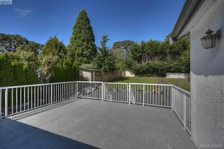 Photo 10: 3381 Cook Street in VICTORIA: SE Maplewood Single Family Detached for sale (Saanich East)  : MLS®# 379682