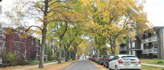 Photo 4: 8 10515 80 Avenue in Edmonton: Zone 15 Condo for sale : MLS®# E4218030