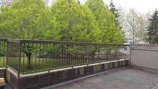 "Photo 8: 102 6651 LYNAS Lane in Richmond: Riverdale RI Condo for sale in ""BRAESIDE"" : MLS®# R2056784"