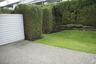 Photo 31: 19 2989 Trafalgar Street in Abbotsford: Central Abbotsford Townhouse for sale : MLS®# R2239067