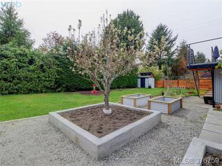 Photo 19: 4419 Chartwell Drive in VICTORIA: SE Gordon Head Single Family Detached for sale (Saanich East)  : MLS®# 376759