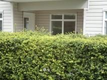 """Photo 12: 117 32085 GEORGE FERGUSON Way in Abbotsford: Abbotsford West Condo for sale in """"Arbour Court"""" : MLS®# R2077958"""