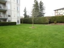 """Photo 11: 117 32085 GEORGE FERGUSON Way in Abbotsford: Abbotsford West Condo for sale in """"Arbour Court"""" : MLS®# R2077958"""