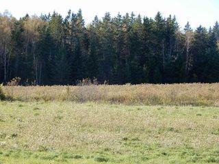 Photo 23: 4815 Scotsburn Road in Scotsburn: 108-Rural Pictou County Farm for sale (Northern Region)  : MLS®# 201923231