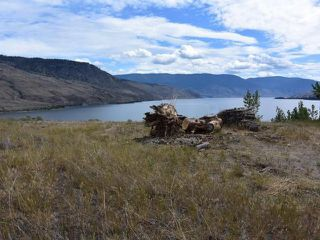 Photo 3: LOT 21 HARE ROAD in : Cherry Creek/Savona Lots/Acreage for sale (Kamloops)  : MLS®# 135525