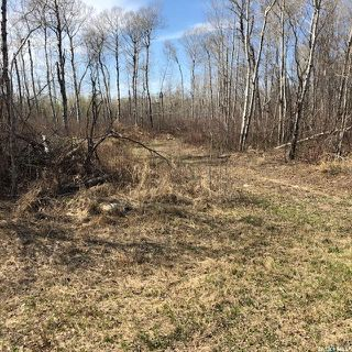Photo 2: Wilson building acreage in Star City: Lot/Land for sale (Star City Rm No. 428)  : MLS®# SK771725
