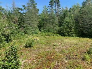 Photo 10: 8940 HIGHWAY 331 in Voglers Cove: 405-Lunenburg County Vacant Land for sale (South Shore)  : MLS®# 202014518