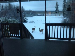 Photo 14: 274043 Twp Rd 480: Rural Wetaskiwin County House for sale : MLS®# E4155743