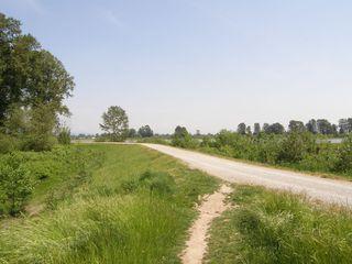 Photo 5: 315 2307 RANGER Lane in FREMONT GREEN SOUTH: Home for sale : MLS®# V1125165
