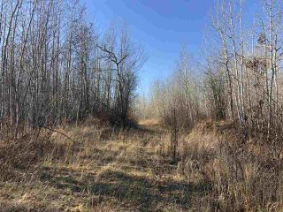 Photo 10: TWP RD 630 RGE RD 262: Rural Westlock County Rural Land/Vacant Lot for sale : MLS®# E4132543