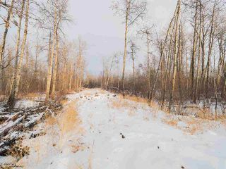 Photo 12: 50367 RR 222: Rural Leduc County Rural Land/Vacant Lot for sale : MLS®# E4136244