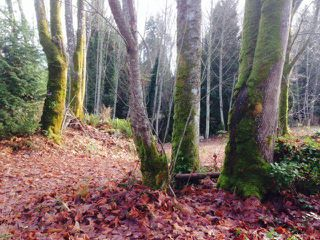 Main Photo: LOT 17 INGLIS Road in Gibsons: Gibsons & Area Land for sale (Sunshine Coast)  : MLS®# R2227805