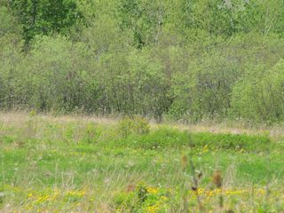 Photo 14: Lot 3 West Halls Harbour Road in Halls Harbour: 404-Kings County Vacant Land for sale (Annapolis Valley)  : MLS®# 201911037