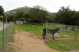 Photo 20: JAMUL House for sale : 2 bedrooms : 17595 Lyons Valley Road