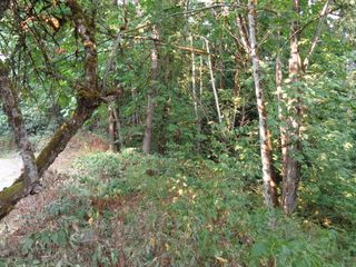 Photo 3: 22784 ROSS Road in Hope: Hope Center Land for sale : MLS®# R2230846