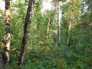 Photo 2: 22784 ROSS Road in Hope: Hope Center Land for sale : MLS®# R2230846